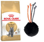 ROYAL CANIN British Adult 10kg+ZABAWKA!!